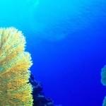 Alghe marine integratori alimentari d'eccellenza